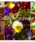 An Edible Garden - Container Gardening & Other Plantings