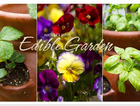 An Edible Garden - Container Gardening and other planthings | TeenieCakes.com