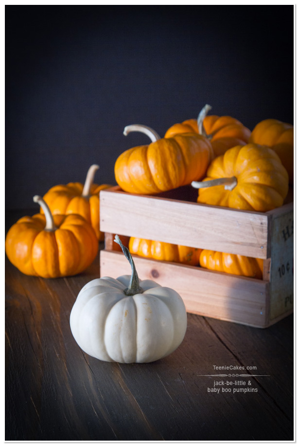 Jack-Be-Little & Baby Boo Pumpkins | TeenieCakes.com
