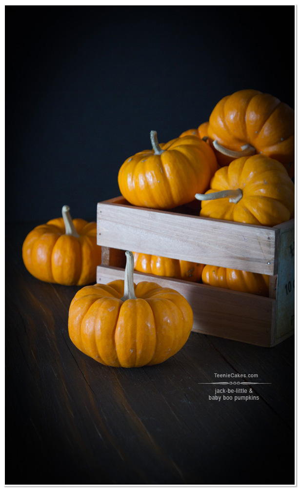 Jack-Be-Little Pumpkins | TeenieCakes.com