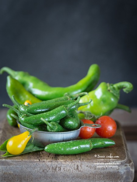 Vegetable Garden Harvest - Peppers and Tomatoes - TeenieCakes.com
