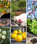 Edible Gardening Section Expanded