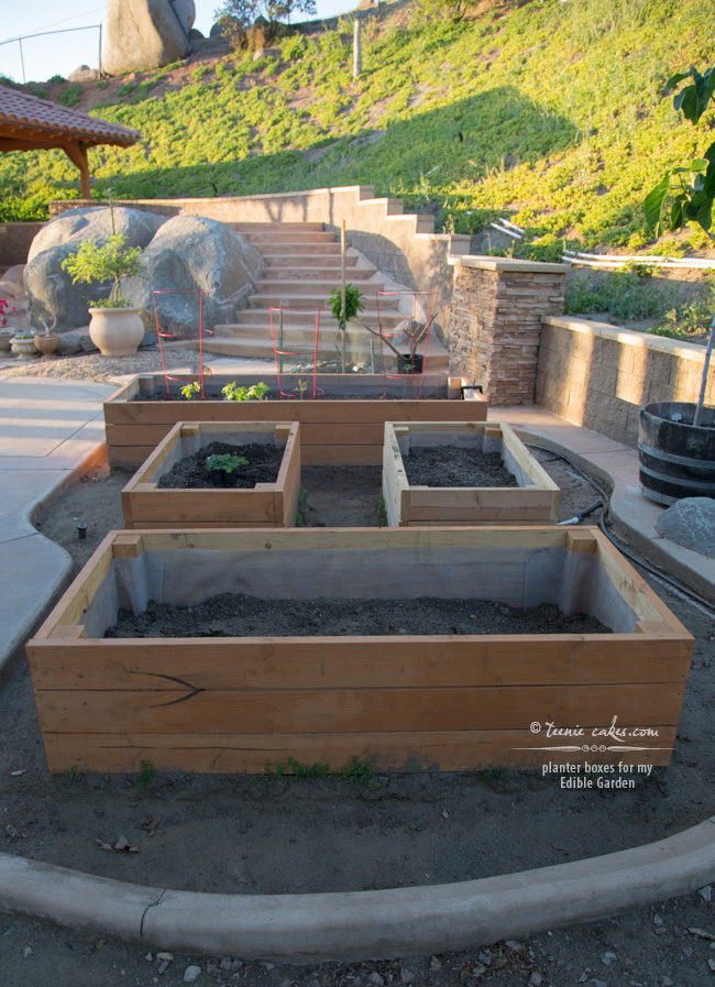 Planter boxes for my Edible Garden - TeenieCakes.com