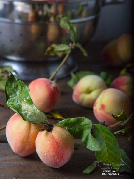 Babcock Peaches - Cristina A-Moore Photography