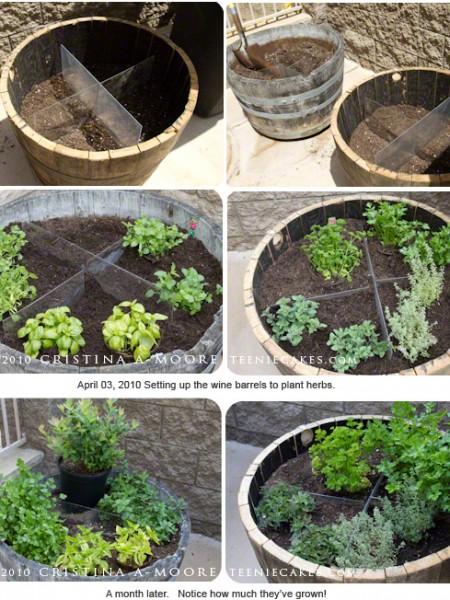 Herb Garden using Wine Barrels - on TeenieCakes.com