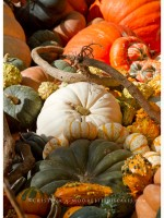 The Spectacular and Colorful Squash