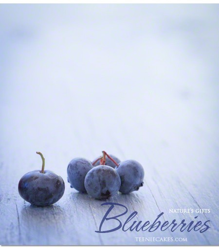 Nature's Gifts: Seasonal Garden Blueberries photography | Cristina A-Moore photography for TeenieCakes.com