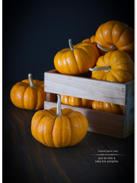 Jack-Be-Little Pumpkins photography | TeenieCakes.com