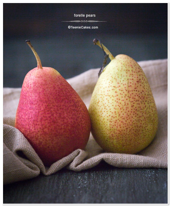 Pair of Forelle Pears photography    TeenieCakes.com