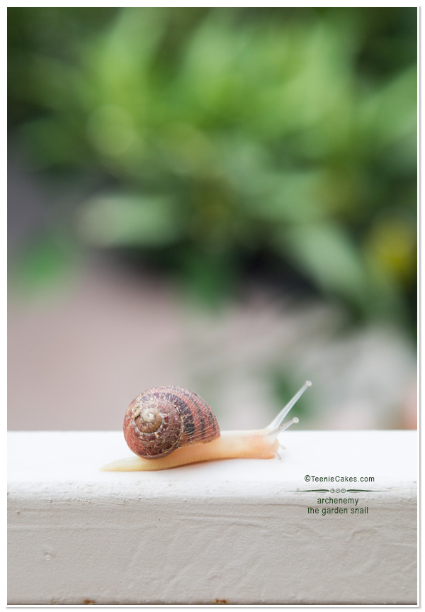 The Garden Snail - photography | TeenieCakes.com