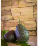 Summer 2013 Garden and Landscape - garden hass avocados | TeenieCakes.com