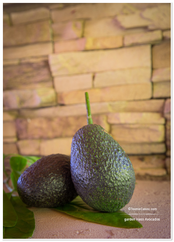 Summer 2013 Garden and Landscape - garden Hass avocados - photography | TeenieCakes.com