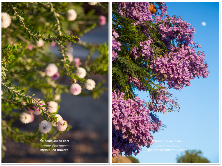 Summer 2013 Garden  - Color: Melaleuca & Jacaranda - photography | TeenieCakes.com