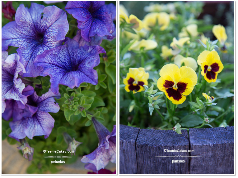 Summer 2013 Garden - Color: Purple Petunias & Yellow Pansies - photography | TeenieCakes.com