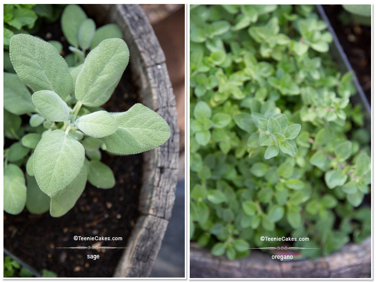 Summer 2013 Garden sage & oregano - photography | TeenieCakes.com