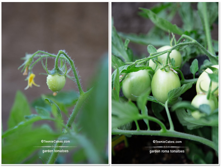 Summer 2013 Garden Roma tomatoes - photography | TeenieCakes.com