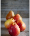 Seckel Pears 2012 | TeenieCakes.com