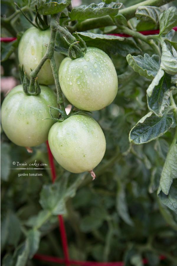 Edible Gardening - Garden Tomatoes | TeenieCakes.com