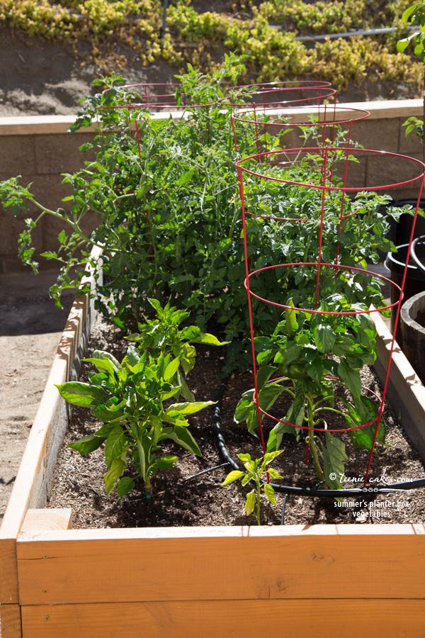 Edible Gardening - Raised Planter Beds for my Vegetables | TeenieCakes.com