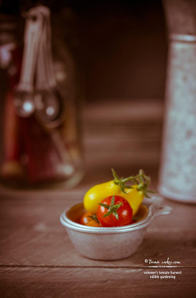 yesteryear summer's tomato harvest- edible gardening | TeenieCakes.com