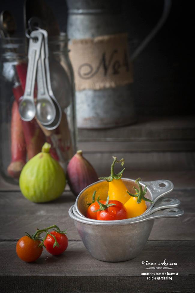 summer's tomato harvest- edible gardening | TeenieCakes.com