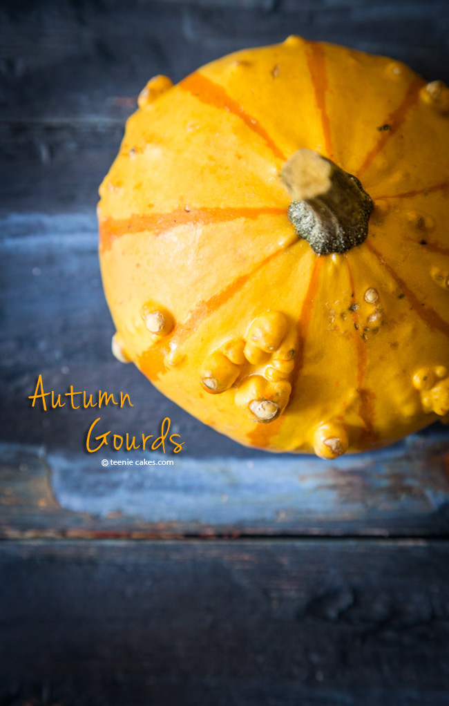 Autumn Gourds photography