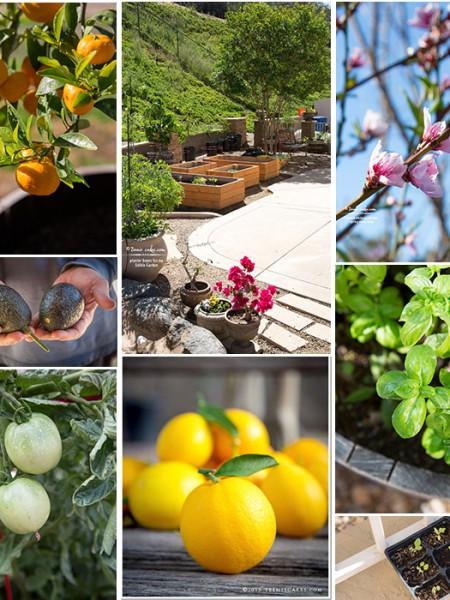 Organic Edible Garden in Southern California - TeenieCakes.com