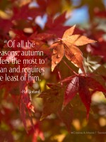 Bid Summer Farewell, Welcome Autumn